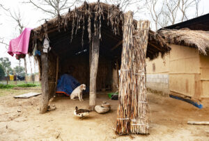 thatched hut, elephant grass, dog and duck