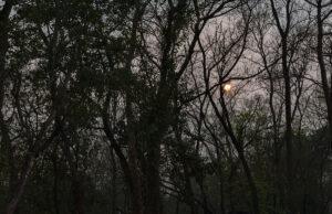 sunset among trees